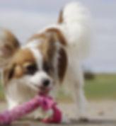 Tierrecht, Rechtsanwalt Tierrecht, Anwalt Tierrecht, Maulkorbpflcht, Kampfhund, Anwalt Hund, Leinenzwang