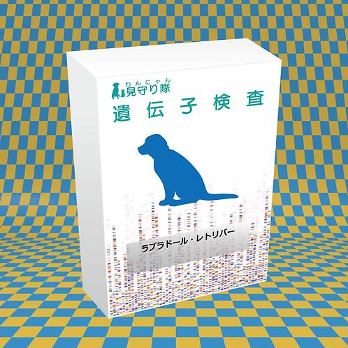 犬・遺伝子検査(ラブラドールリトリーバー)