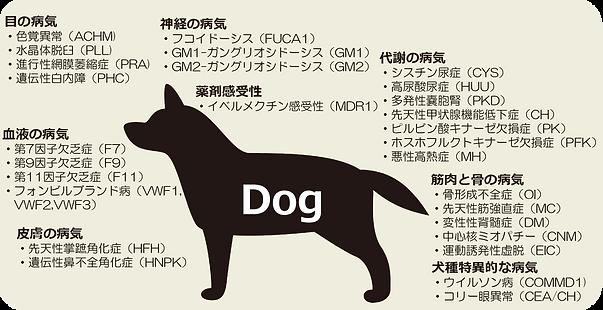 犬検査項目.png