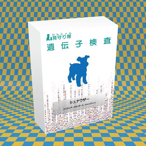 犬・遺伝子検査(シュナウザー)
