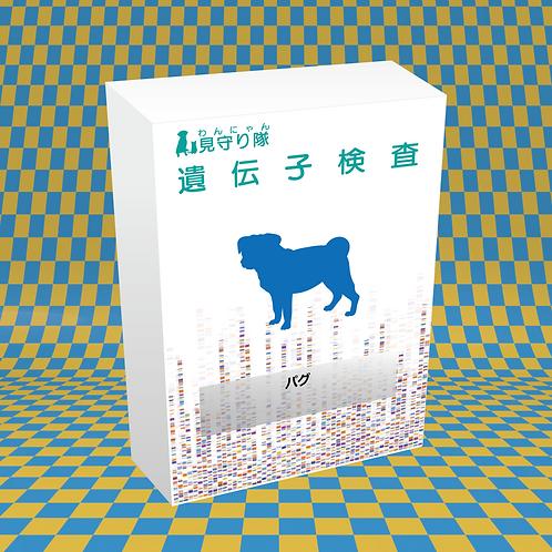 犬・遺伝子検査(パグ)