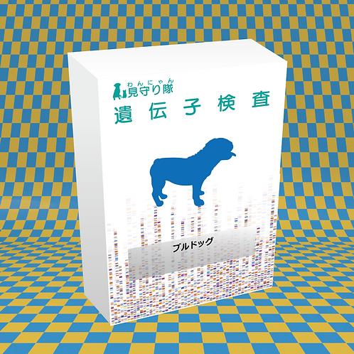 犬・遺伝子検査(ブルドック)