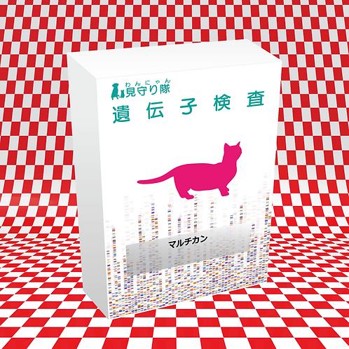 猫・遺伝子検査(マルチカン)