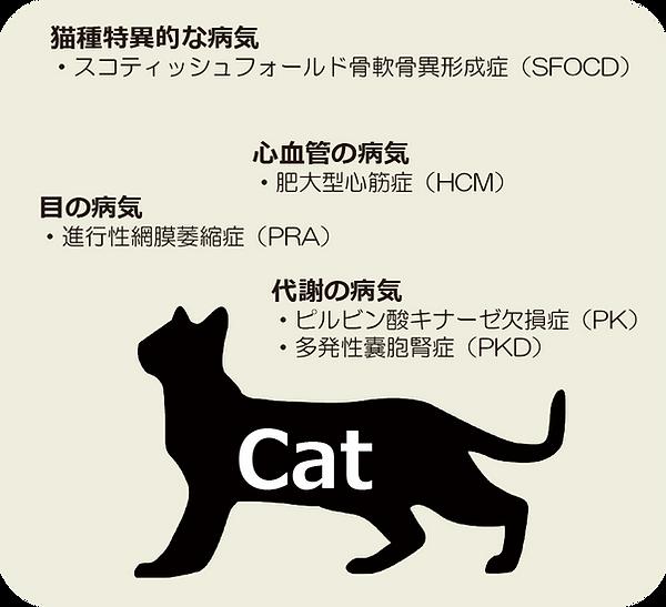 猫検査項目.png