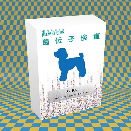 犬・遺伝子検査(プードル)