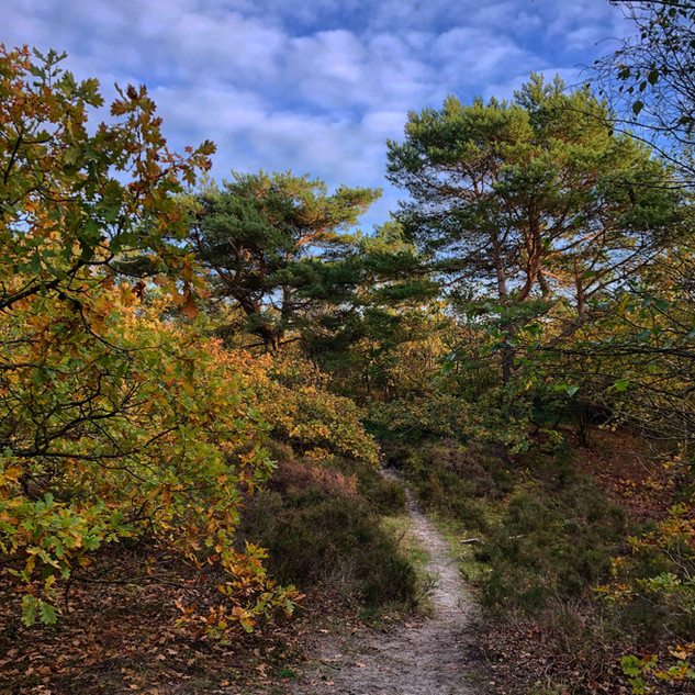 FORESTS, HEATH AND DUNES