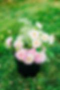 IMG_8302_websize.jpg
