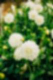 299A0344_websize.jpg
