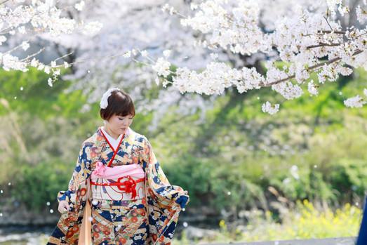 成人式桜ロケーション03.JPG