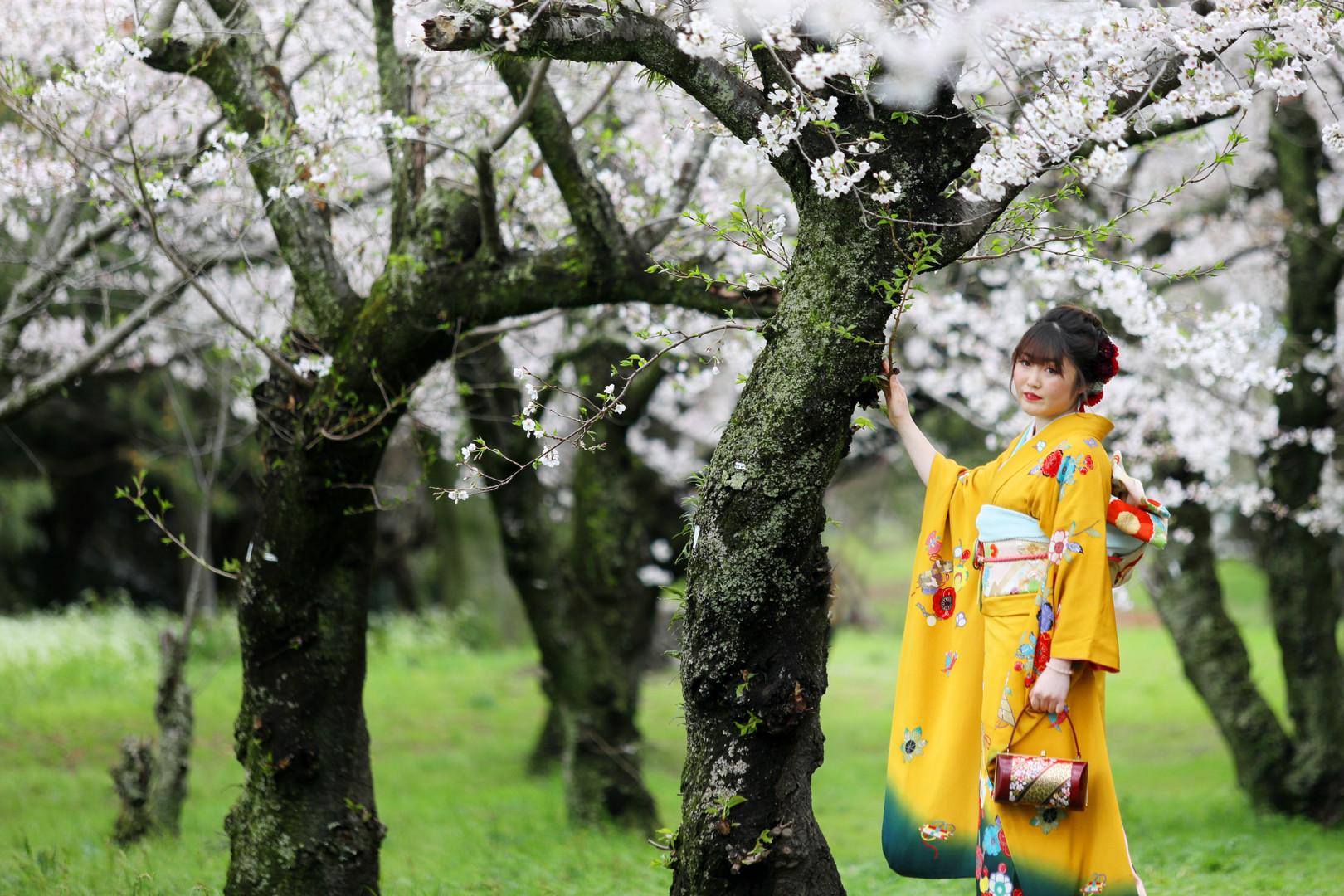 成人式桜ロケーション05.JPG