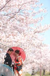 和装桜ロケーション撮影