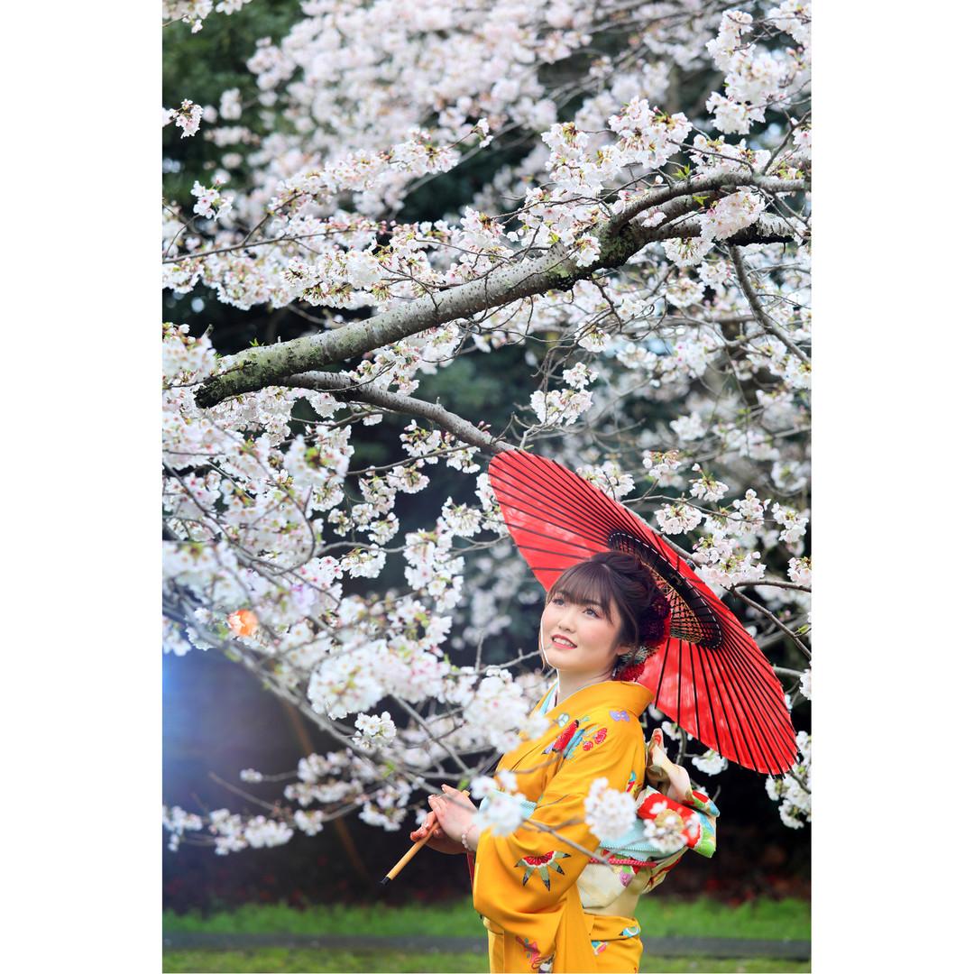 成人式桜ロケーション09.jpg