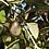 Thumbnail: QC, Azeite Virgem Extra Bio | Extra Virgin Olive Oil Bio