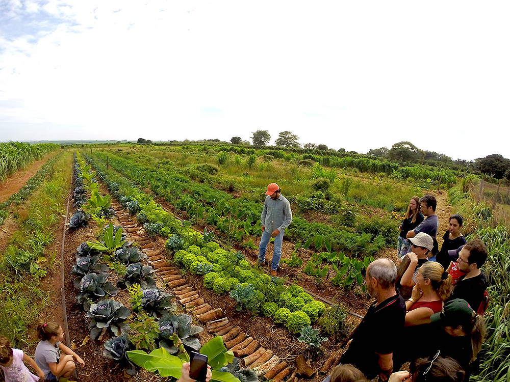 Plantio agroflorestal na Terra Planta