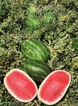 AW9119 Fruit 1.jpg