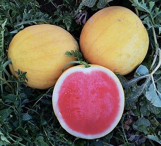 AW0089 Fruits 2.jpg