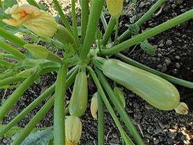 AQ7101 plant.png