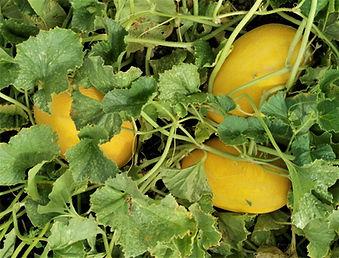 AM6089 Fruits 2.jpg