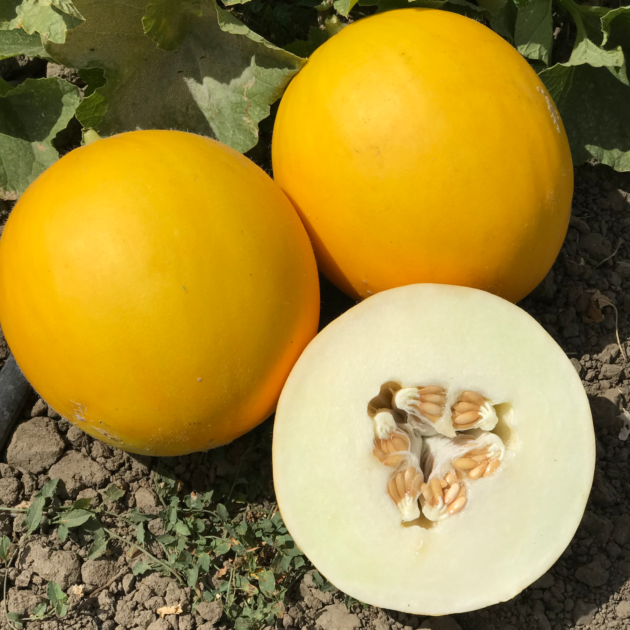 AS9128 Fruit 2