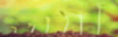 Seed germination 1.png