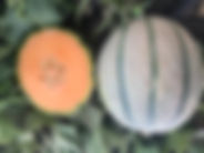 ASM9063 Fruit.JPG