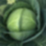 Cabbage head.png
