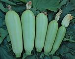 AQ7081 Fruits.png