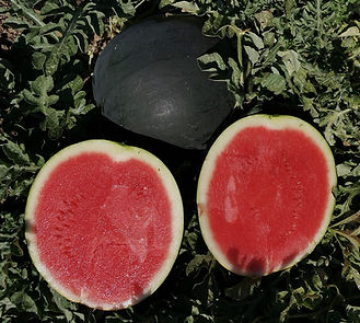 AS9106 fruit 2.jpg