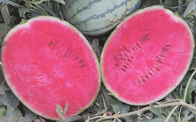 AW0024 Fruits-1.jpg