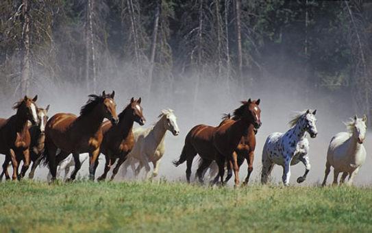 Cavalli-in-corsa.jpg