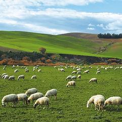 perdita raccolto o bestiame assicurazione