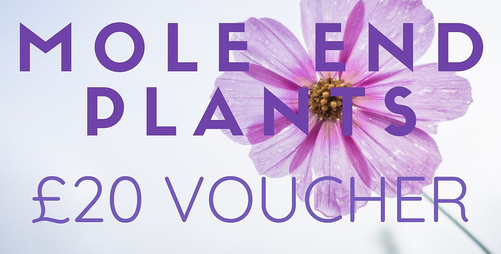 Mole End Gift Voucher £20