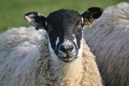 Farm Stay in the Cotswolds