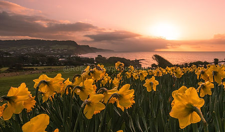 Spring Sunrise Sidmouth