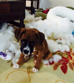 Bed exploded