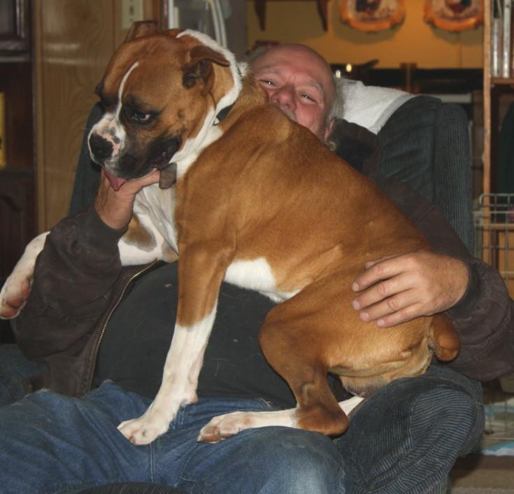 Just a little 70 lb lap puppy