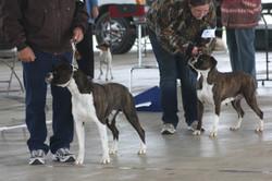 2014 UKC dog show