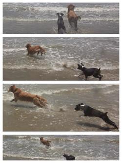 Rollo at the beach..