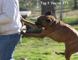 Tag you're IT !!!!