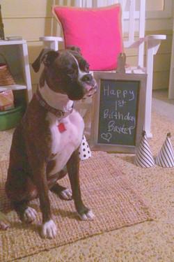 Baxter 1 year