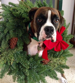Weston says Merry Christmas