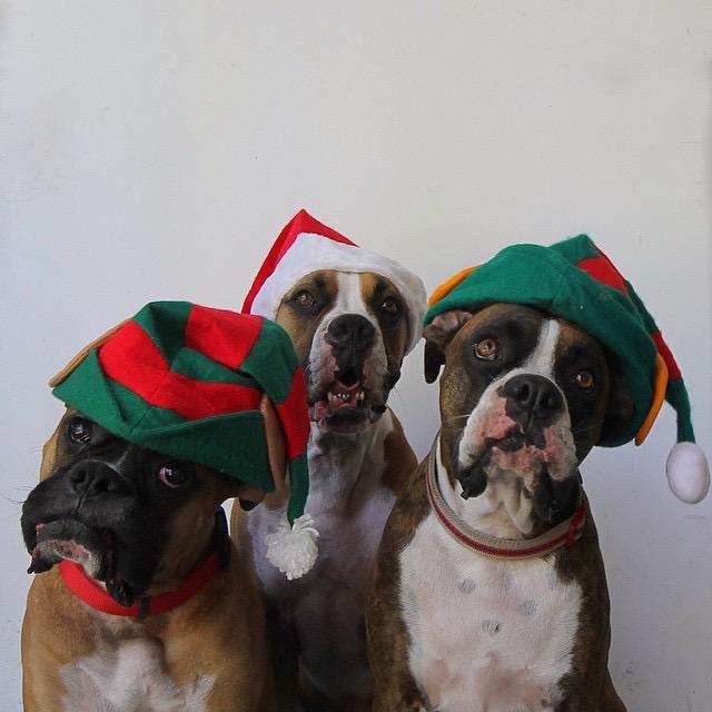Weston and his buddies