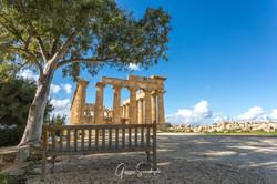 scandroglio-180211-Sicily_Selinunte_Gree