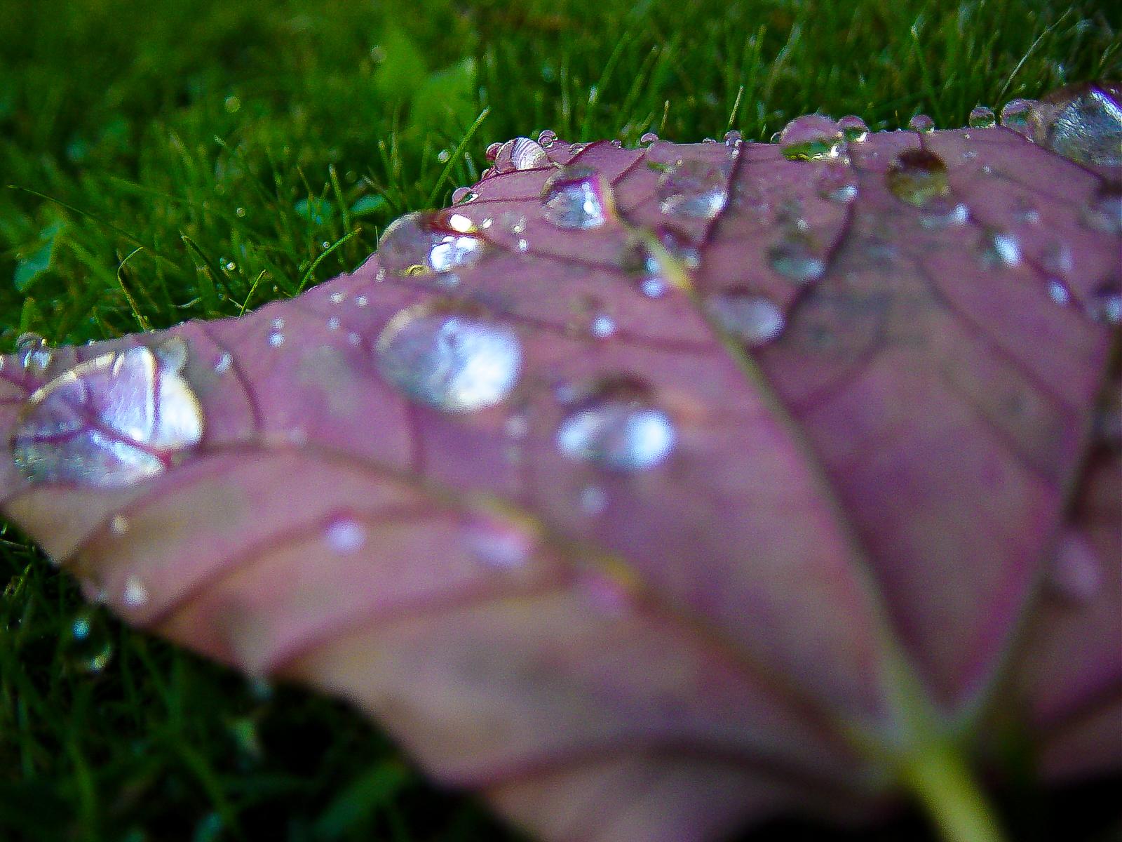 Gocce di pioggia su una foglia 1
