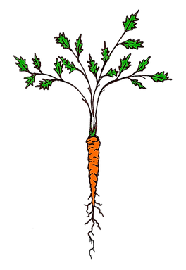 transparent carrot.png