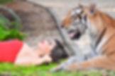 Quince con tigre