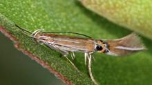 Många nya insekter för Närke i sommar!