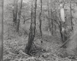 Amrita Stuetzle - 304 - Forest Smoke