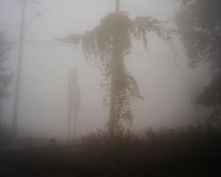 Amrita Stuetzle - 501 - Fog Landscape