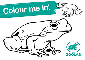 ZL037 COLOURING IN SHEETS3.jpg